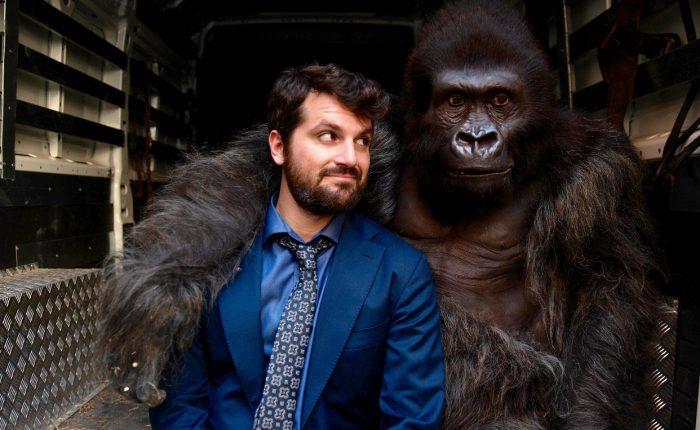attenti-gorilla